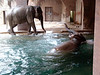2009-03-05 Bathing Elephant style